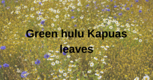 Green hulu Kapuas leaves