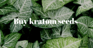 An Overview of Kratom Seeds
