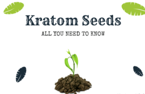 buy kratom seeds