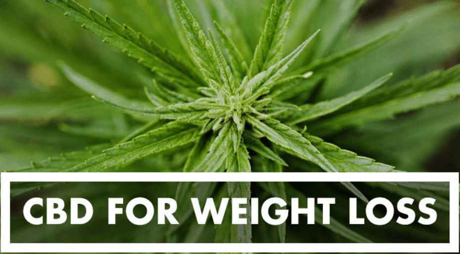 Best CBD Oils For Weight Loss which works for me