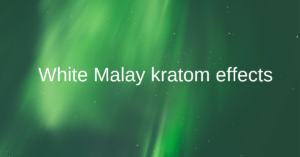 White Malay kratom | Benefits,dosage,Effects & Side effects