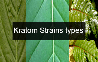 Top 12 best types of kratom strains effects & dosage guide 2018-19